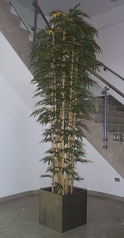 Artificial Bamboo Trees - Extra Large - Allissias Attic  &  Vintage French Style - 2