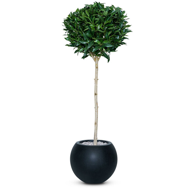Artificial Bay Ball Tree