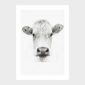 Cow | Limited Edition