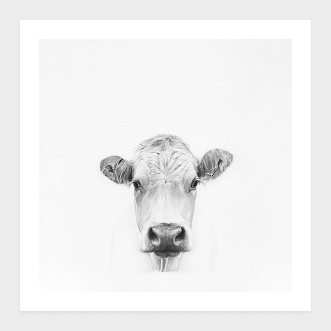 Cow | Open Edition