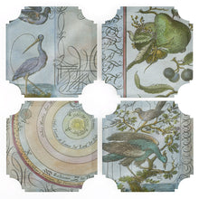 Load image into Gallery viewer, Coasters | Celestial Birds & Pears, set of four