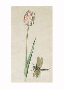 British Watercolor Botanicals, 18th c.