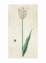 Load image into Gallery viewer, British Watercolor Botanicals, 18th c.
