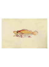 Load image into Gallery viewer, Fish, Watercolor, 19th c.