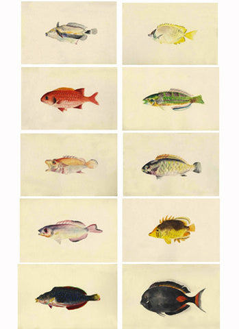 Fish, Watercolor, 19th c.