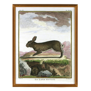 Reprotique Natural History Prints - Framed
