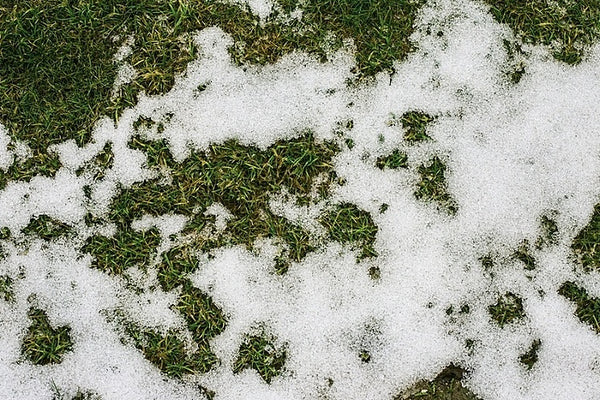 Prevent the Effects of Snow and Ice on your Facility's Turf and Trees