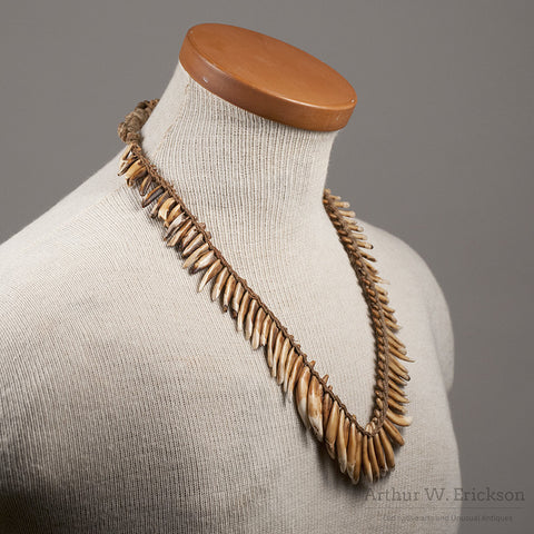 NewGuinea Dog Tooth Necklace - Arthur W. Erickson - 4