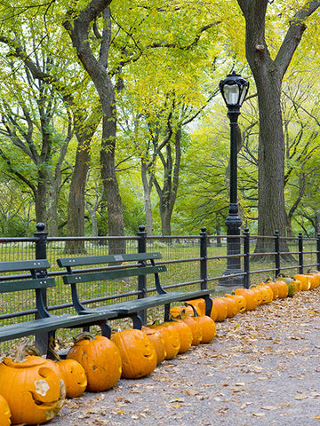 Pumpkins in the Park Photography Backdrop / 091 - DropPlace