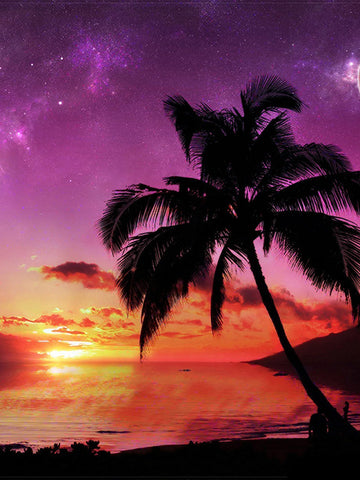 Palm Tree Sunset I Photography Background / 2815 - DropPlace