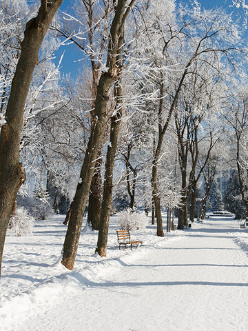 Snowy Path Photo Backdrop / 686 - DropPlace