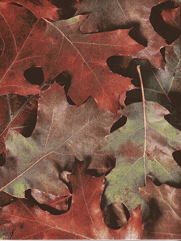 Leaves Everywhere Photography Backdrop / 7177 - DropPlace