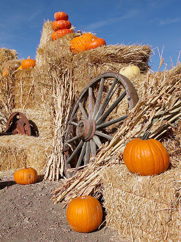 Pumpkin Patch Photo Backdrop / 7815 - DropPlace