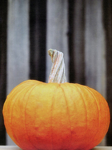 Carve a Pumpkin Printed Photo Backdrop / 8015 - DropPlace