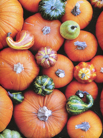 Cornucopia I Photography Background / 8019 - DropPlace