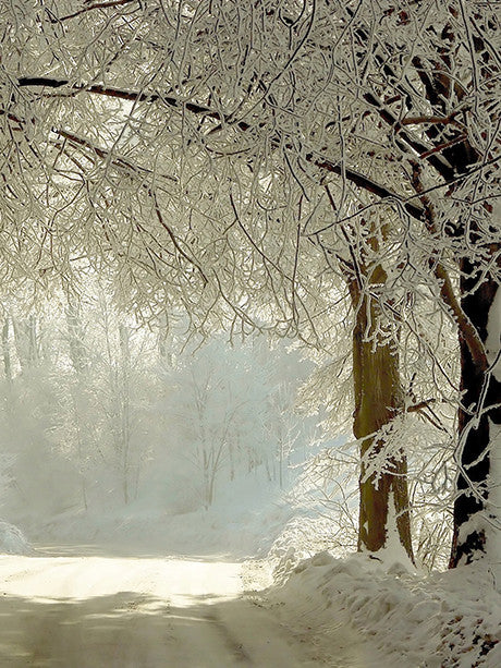 Narnia Photo Background / 2037 - DropPlace