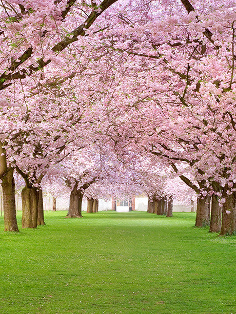 Pink Blossom Trees Printed Photography Background / 2062 - DropPlace