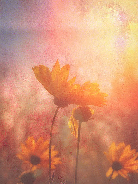 Watercolor Sunflowers Photography Backdrop / 2249 - DropPlace