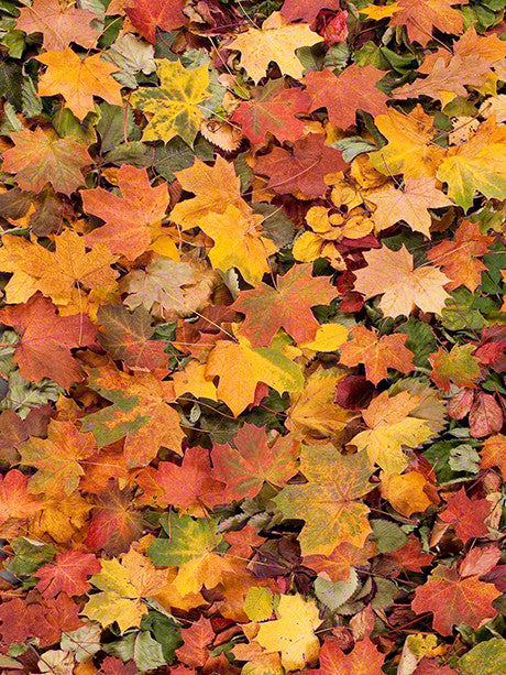 Leaf Pile Printed Photo Background / 239