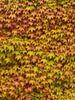 Leaves Wall Photography Background / 3414