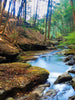 Stream Green Trees Photo Background / 7119 - DropPlace