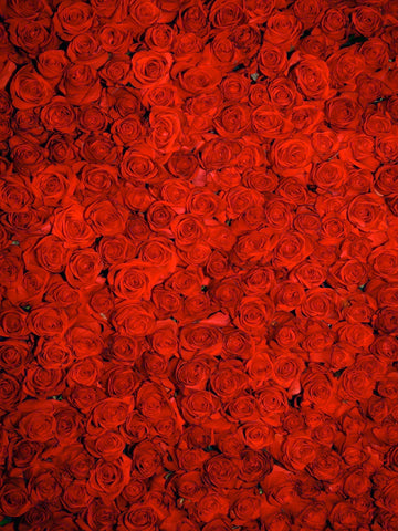Endless Roses Printed Photo Background / 7888 - DropPlace