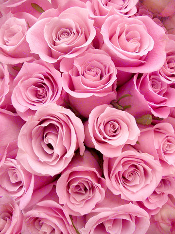 Pink Roses Printed Photo Backdrop / 823 - DropPlace