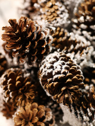 Pinesnow Printed Photo Background / 905 - DropPlace