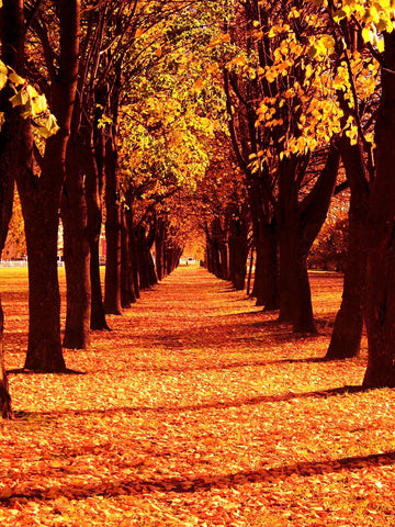 Walk of Autumn Printed Photography Backdrop / 9211 - DropPlace