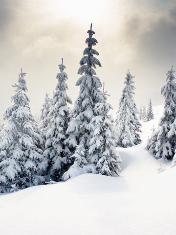 Winter Wonderland Photography Background / 9267 - DropPlace
