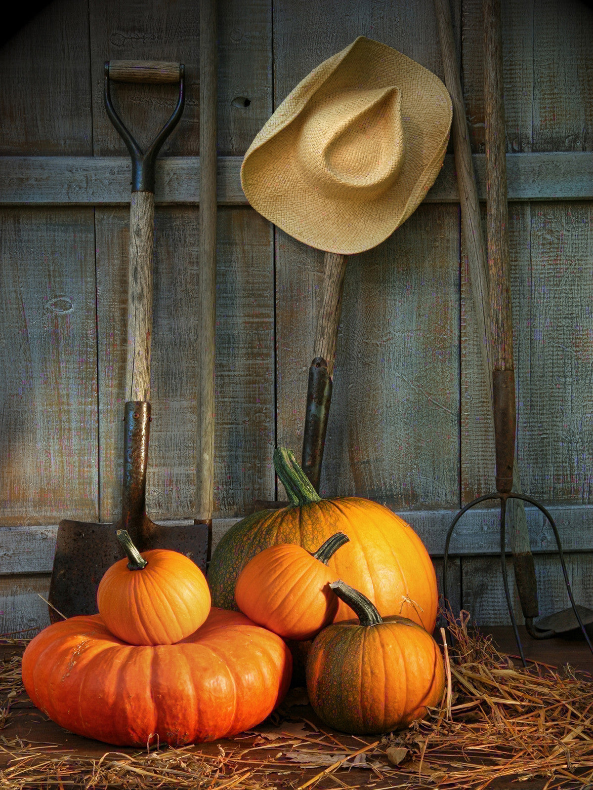 Pumkins With Shovel Printed Photo Background / 9408 - DropPlace