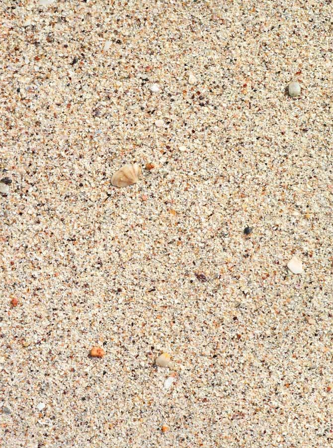 Sand With Shells Floor Backdrop - 1127 - DropPlace