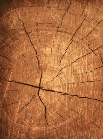 Wood Tree Backdrop - 7174 - DropPlace