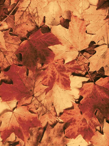 Autumn Orange Leafs Photo Backdrop - 7175 - DropPlace
