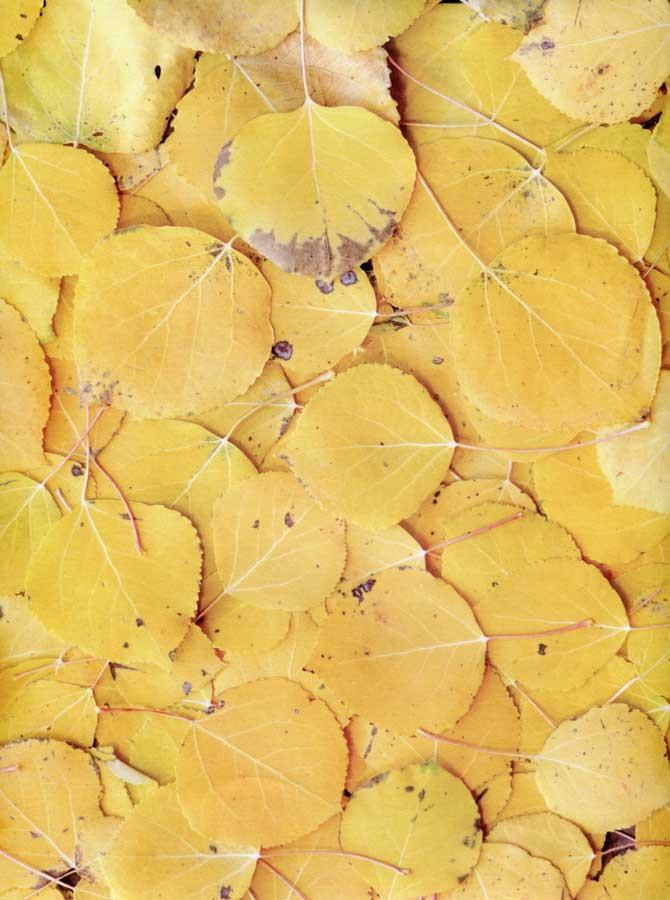 Autumn Golden Leafs - 8003 - DropPlace
