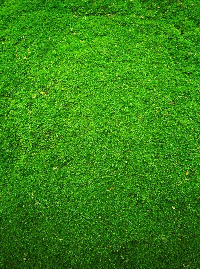 Green Grass Backdrop - 9403 - DropPlace