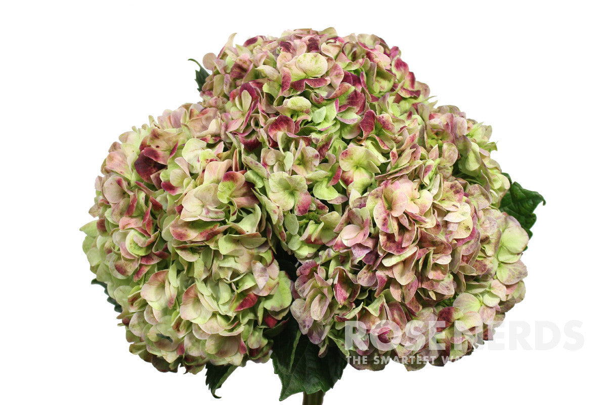 Antique green hydrangea bouquet pixshark