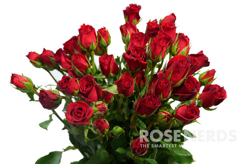 valentine's day wholesale flowers | rose nerds | flowers for, Ideas