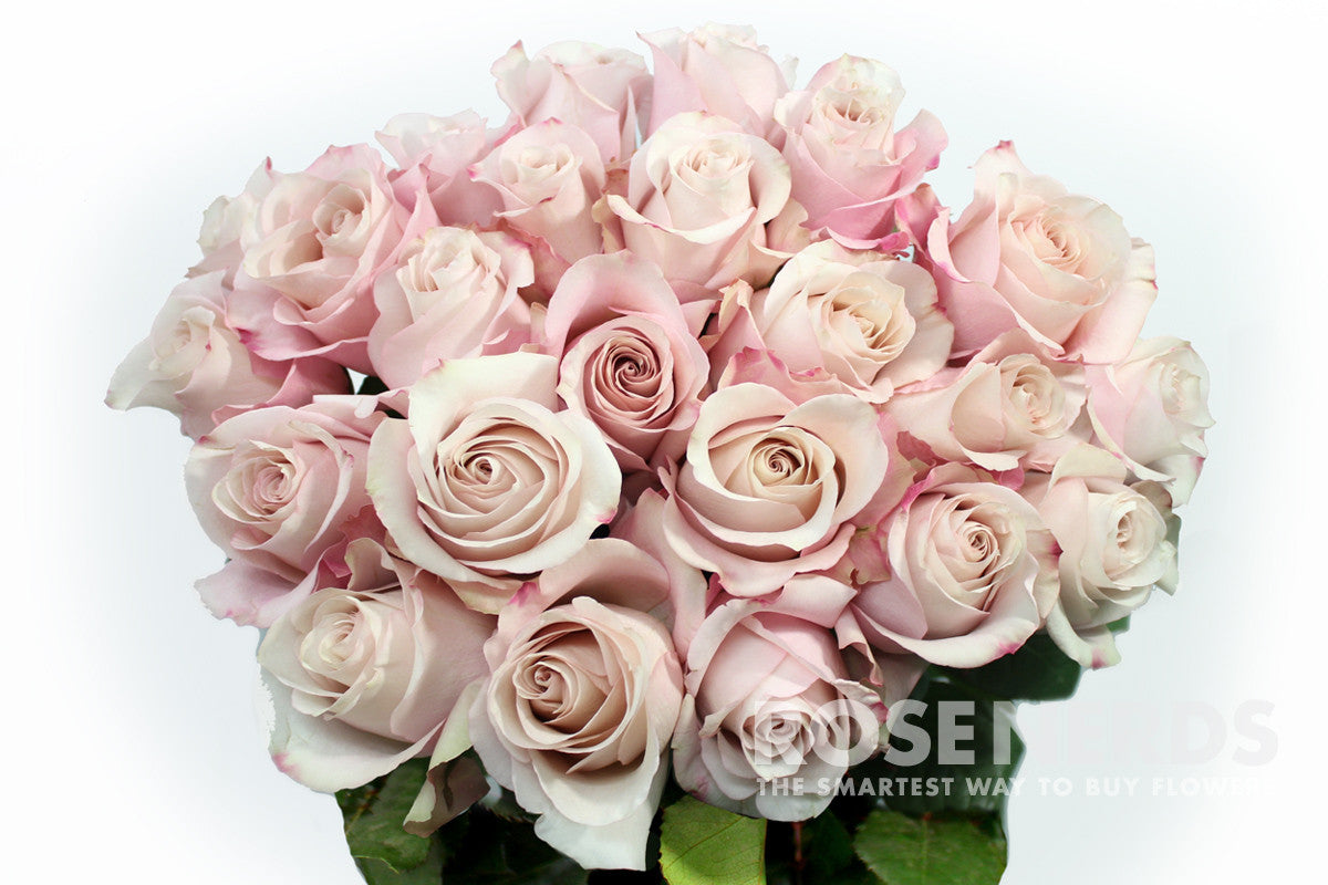 Pictures Of Anna And Blush Roses 44