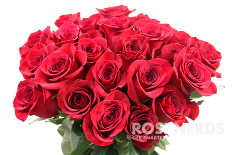 wholesale red roses for fundraising