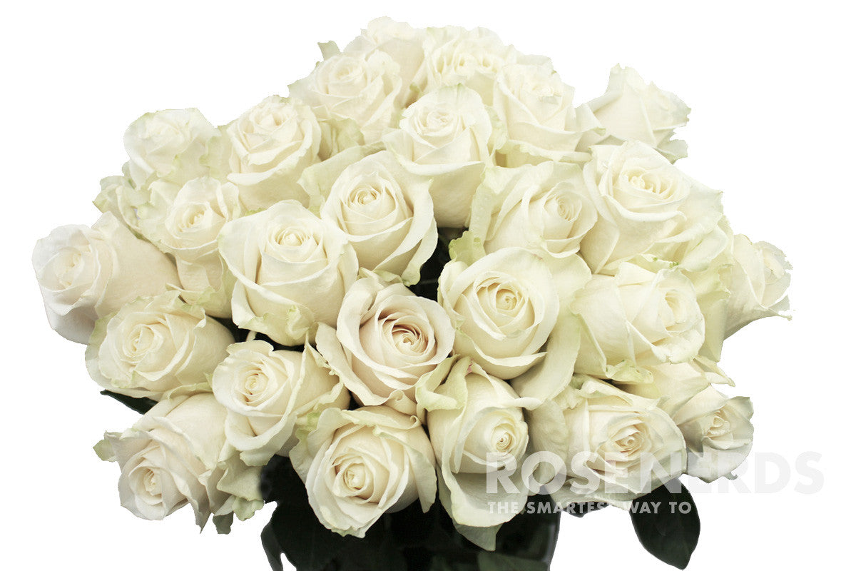 Home bulk roses peach roses - Wholesale White Roses