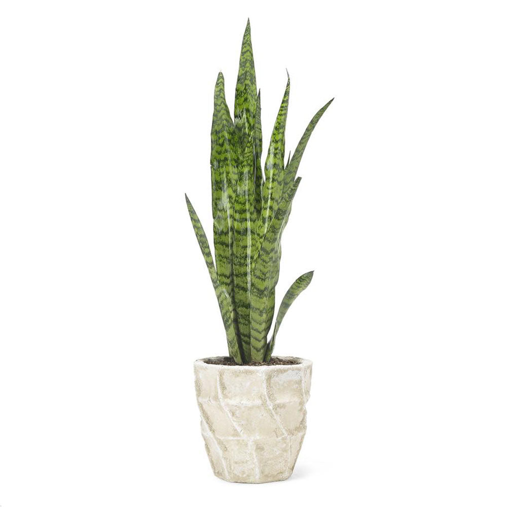 Sansevieria Plant by Grace & Thorn | Do Shop