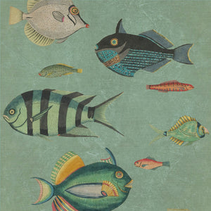 Poissons Wallpaper