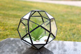 "Black Double Prism Geometric Glass Terrarium. 7""H"