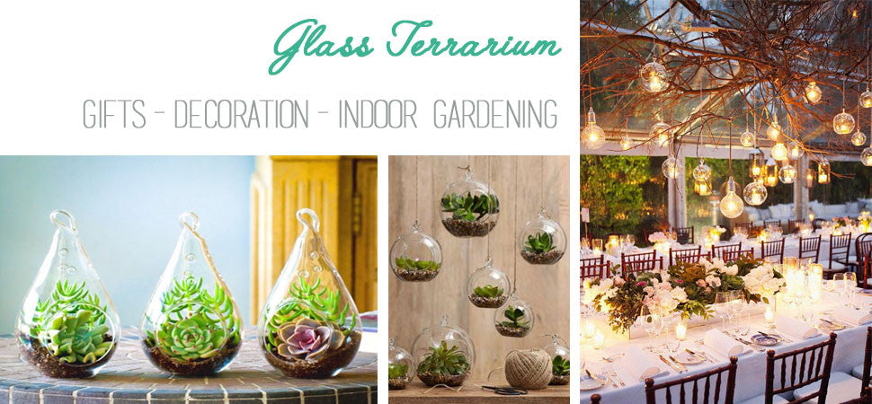 Glass Terrariums are perfect for gifts, decoration, and indoor gardening