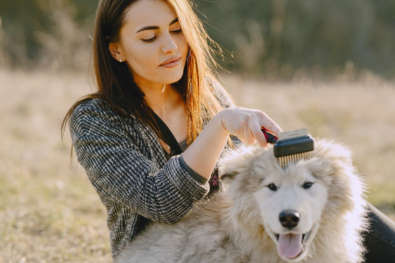 Don't Just Brush Your Dog's Coat, Love It!
