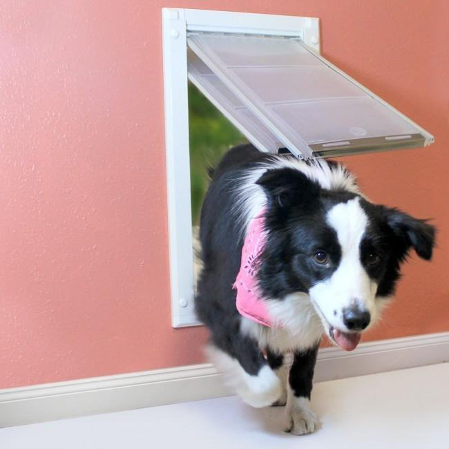Wall Mounted Pet Doors Entry Through The Wall For Your
