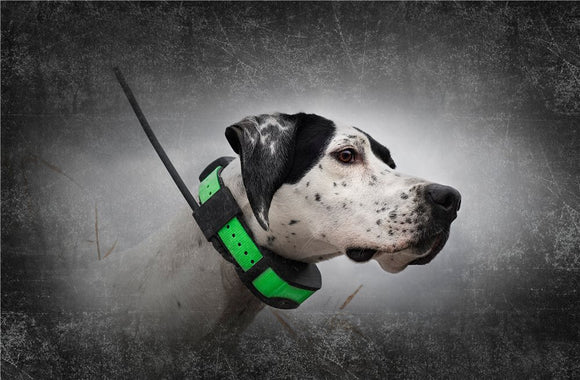 SportDOG TEK 1.5 GPS Tracking Dog Collar  - 7 Miles, 12 Dogs - Optional E-Collar Training Model