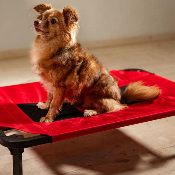 Dog Bed - Lucky Dog Comfort Cot