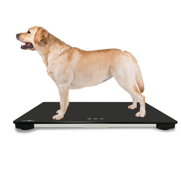 Veterinary Scales - ICare Middle Dog Weight Scale